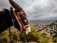 Road_Trip-Greece_pr