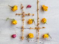 Rose+carlig_pr