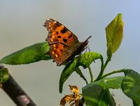 butterflys_pr