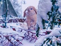 Snow_munich_pr