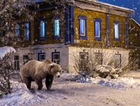 Suzdal_bear_pr