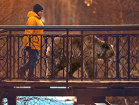 Streshnevo_Bridge_bear_pr