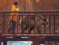 Streshnevo_Bridge_bear_pr