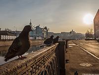 Dove_morning_pr