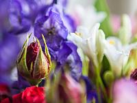 Flowers2014_pr