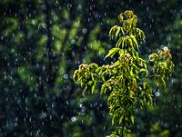 Magic_rain_pr
