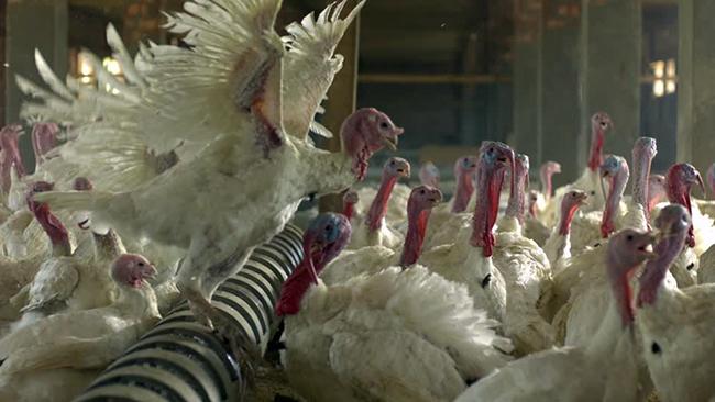 09 turkey-thanksgiving