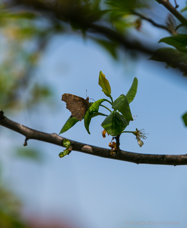 IMG_0298_(650px)